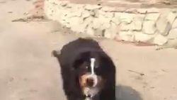 Dolblij weerzien: vermiste hond wacht familie op aan woning die opging in bosbrand