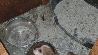 Vijf puppy's en zeven andere verwaarloosde dieren bevrijd