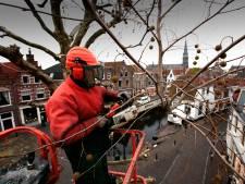 Oudewater helpt met onderhoud bijzondere boom in de tuin