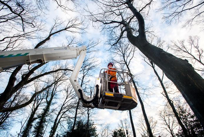 Bomeninspectie in Arnhem, na een storm.