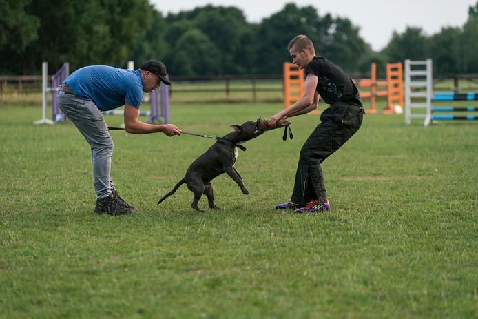 De hondenvereniging HSV Aalst-Waalre. Foto Greetje van Son