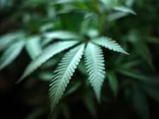 """Atypische cannabisdealer komt wellicht weg zonder straf: man weigerde uitkering te krijgen en zou drugs hebben verkocht """"om anderen te helpen"""""""