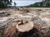 Noodkreet natuurorganisaties: stop met kaalkap bossen in Nederland