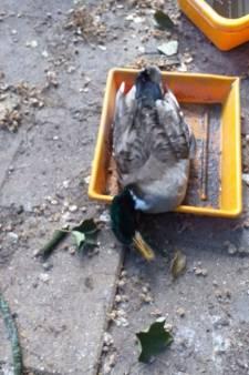 Voorstel om vervroegd hekken om Vogeleiland te plaatsen weggestemd