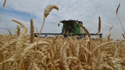 Rusland schort graanexport op tot en met 1 juli