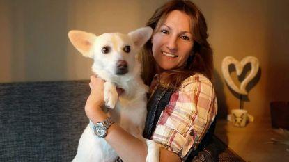 Brugse organiseert benefiet ten voordele van Roemeense straathonden