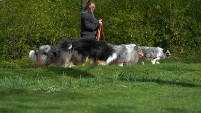 Grote kans dat hondentaks volgend jaar verdwijnt