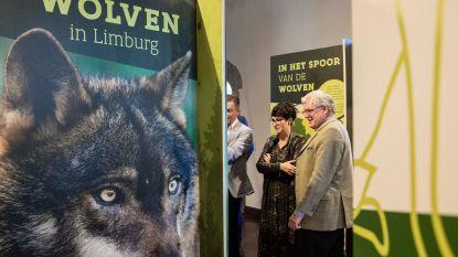 Pop-upexpo 'Wolven in Limburg' reist met succes verder