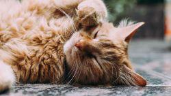 Catfluencer 101: maak van je kat een online ster