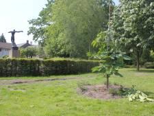 Anne Frankboom drie keer vernield; Waalwijk zit ermee in de maag