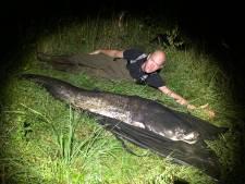Enschedeër is record alweer kwijt: meerval van 2,36 meter in Ulft gevangen