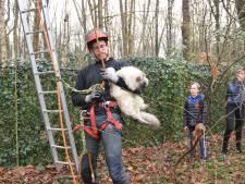 Bomenverzorger redt 'verzopen' kat Mickey na 24 uur uit hoge boom