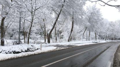 IN BEELD Pak meer sneeuw dan gisteren: Oostkamp wordt wakker onder dik sneeuwtapijt