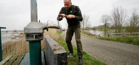Sluis dicht om 'verdwenen moerasvogels'  naar Oude Waal te lokken