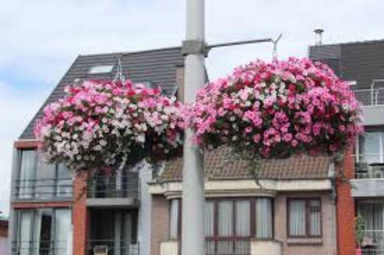 Er komen opnieuw bloemen in het Kapelse straatbeeld.