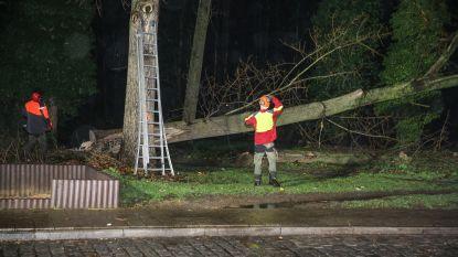 Drie bomen Wielewaalpark omgewaaid, nog 4 geveld