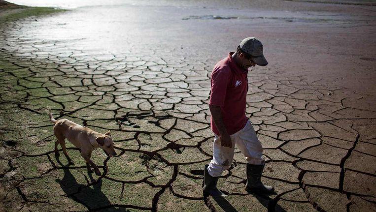 Een Braziliaan loopt met zijn hond over de uitgedroogde bodem van de Paraibuna-dam, onderdeel van het Cantareira-waterreservaat dat São Paulo van het meeste van zijn water voorziet. Beeld reuters