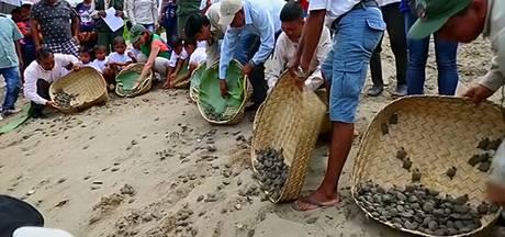 Duizenden bedreigde schildpadden uitgezet in Amazonegebied Peru