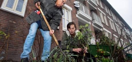 Groen voor grijs: planten van landgoed Mattemburgh fleuren Bergse wijk op