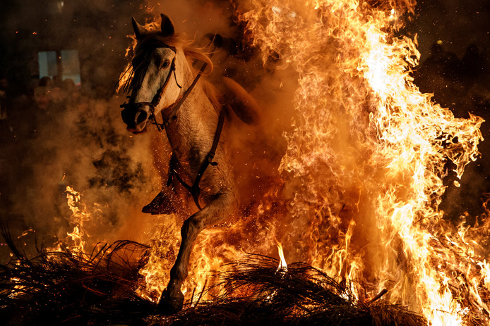 Ruiters springen over een vreugdevuur in het Spaanse dorp San Bartolome de Pinares in midden Spanje, tijdens de opening van het traditionele festival 'Luminarias' ter ere van de heilige San Antonio Abad, beschermheilige van de dieren. Foto Gabriel Bouys