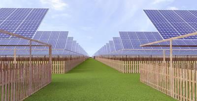 Wandelen tussen de kippen op een zonnepark