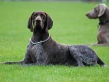 Jongetje (11) in gezicht gebeten door hond in Goirle