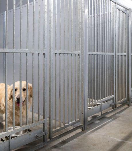Geluidsopname helpt in strijd tegen hondenpension Hengelo: 'Ik heb gelijk, maar krijg het niet'