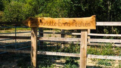Galloway-runderen gaan voortaan als Charlotte, Emma en Paulien door het leven