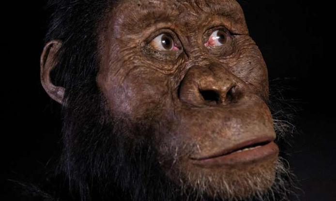 Uit een analyse van de schedel van MRD blijkt dat hij ongeveer 3,8 miljoen jaar oud is.