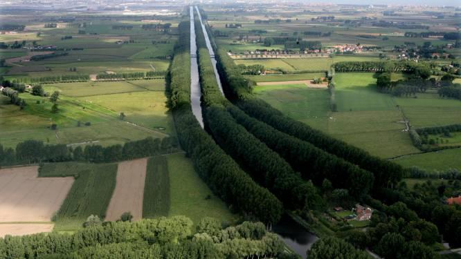 """Bomen langs Leopoldkanaal verdwijnen, maar er komen snel sterkere populieren in de plaats: """"Veiliger voor wandelaars en fietsers"""""""