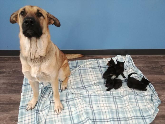 Le chien Serenity et les cinq chatons abandonnés