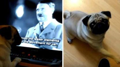 Man die hond Hitlergroet leerde, veroordeeld voor plegen van haatmisdrijf