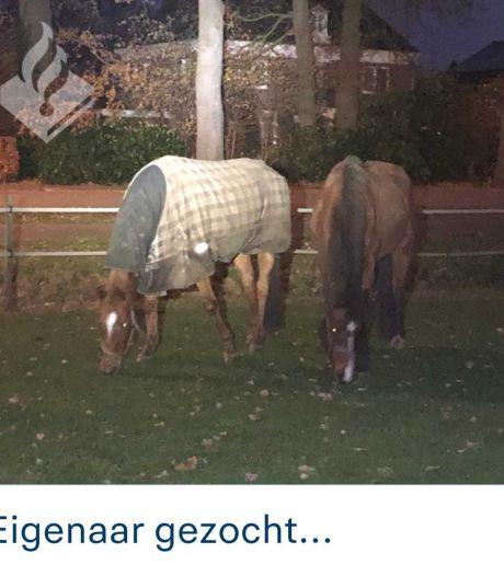 Paarden losgebroken in Wierden, eigenaar inmiddels gevonden