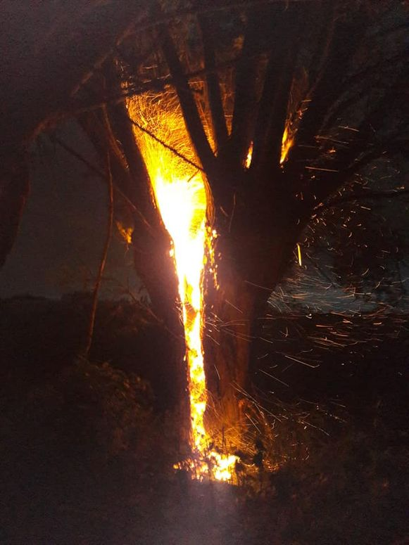 De blikseminslag zorgde voor een vuurbal in de boomstam.