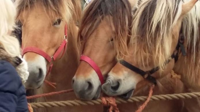Paarden onder elkaar.