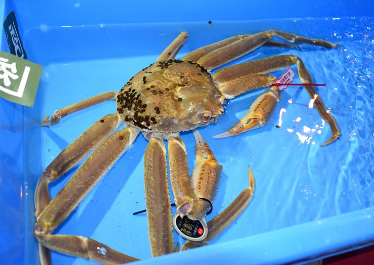 Deze krab leverde tijdens de eerste veiling van het seizoen 5 miljoen Yen of meer dan 41.000 euro op.