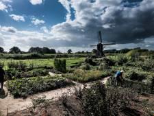 Onrust over windmolens bij Oude IJssel: 'Hoort niet in ons prachtige coulissenlandschap'