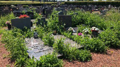 Zo erbarmelijk ligt het kerkhof van Wolvertem er momenteel bij