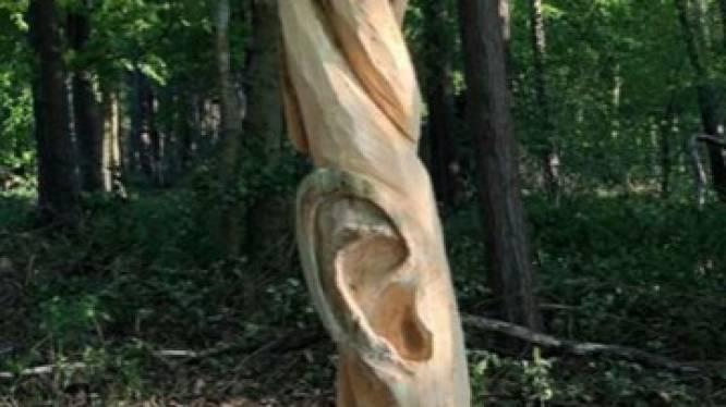 """Dief zaagt houtkunstwerk uit Keigatbos af: """"Wie doet nu zoiets?"""""""