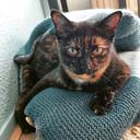 Lisa van Outvorst (Den Bosch): ,,Mijn kat heet Misty. Ik noem haar Snoepie, Schmoopy, Toetie, Muisje, Stinkiedinkie, Vreetbeer, Kletskont.''
