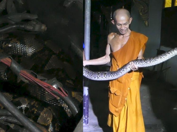 Monnik vindt drie meter lange python in zijn auto