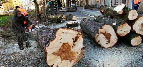 'Alle bomen Rijtuigweg-Zuid kappen'