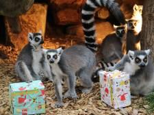 Dieren brullen mee met kerstsingle Dierenpark Amersfoort