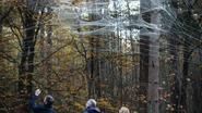 Reusachtig spinnenweb in bosrijk Kattevennen