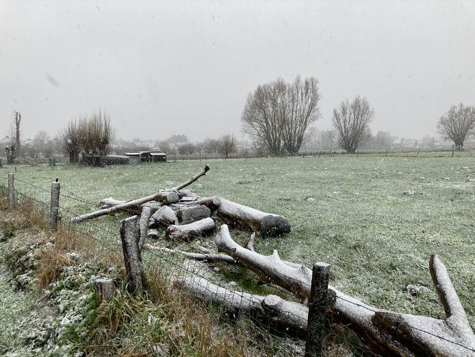 De eerste sneeuw valt in Torhout. Onder meer in de Nachtegaalstraat levert dat mooie plaatjes op.