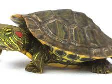 Wim uit Enschede is regeltjes beu: na 40 jaar stopt hij met opvang schildpadden