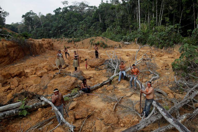 Bossen worden eerst gekapt, om later in brand te steken.