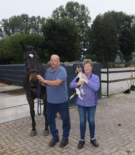 Rechtszaak op handen tegen illegale paardenbak en stapmolen in Nederwetten