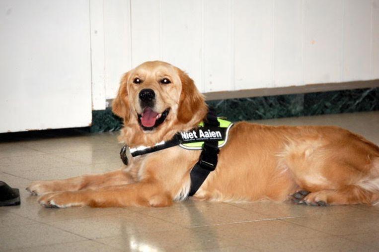 Een hulphond van donate-a-dog Menen