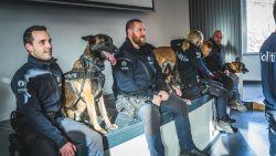 Vier Gentse politiehonden gaan gelijktijdig met pensioen: pensioenfeestje mét hondenkoekjes en burgemeester De Clercq